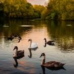 Lac en Angleterre