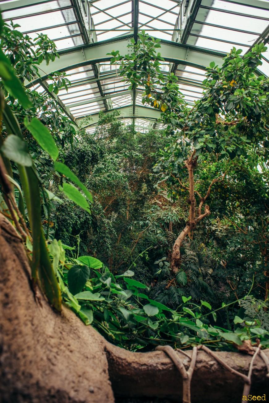 La grande serre du jardin des plantes