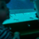 Le bateau aux poissons Isla de los lobos, Fuerteventura