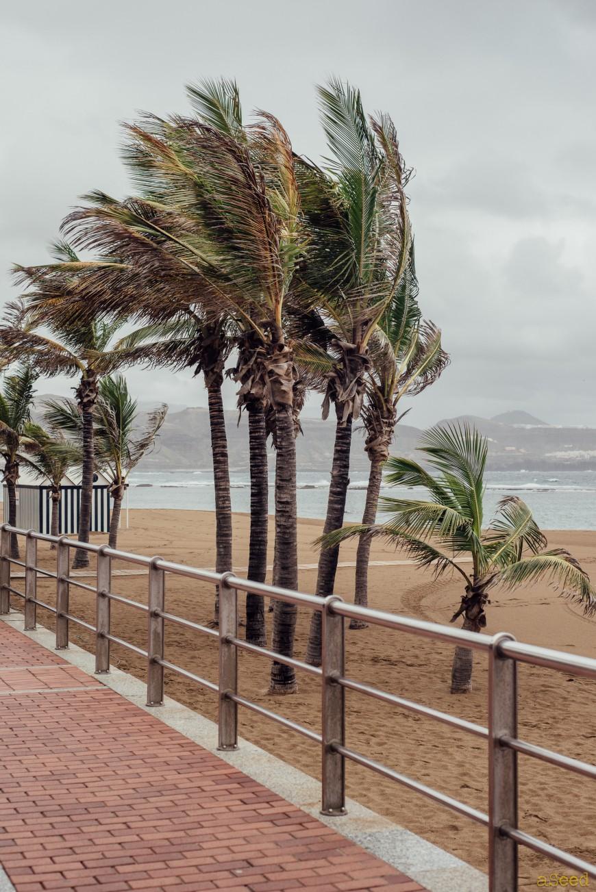 Las Palmas Gran Canaria dans la tempête