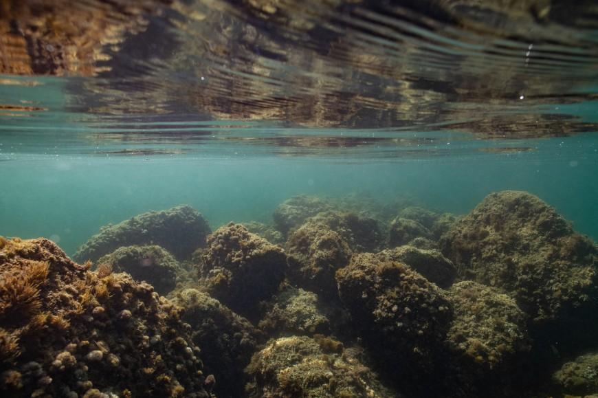 Séance photo underwater Nice Cannes Monaco (9)